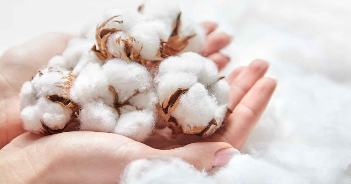 cotton-in-hands